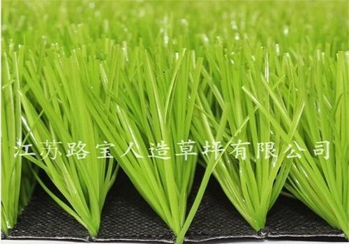 景观 U形单茎果绿单丝草坪