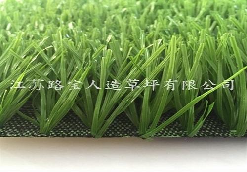 足球场形带茎单丝草坪