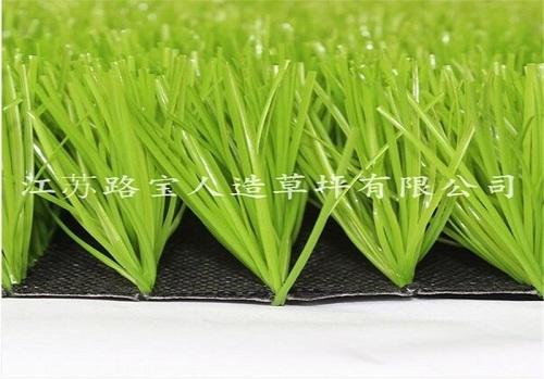 景观U形单茎果绿单丝草坪